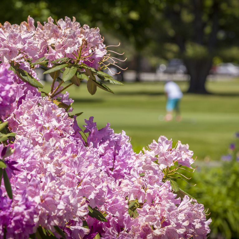 Flowers on Golf Course